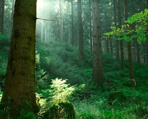 thuringian-forest
